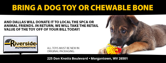 Bring a dog toy or chewable bone